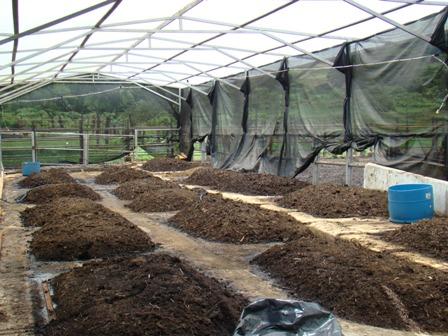 invernaderos permiten aprovechar el humus de lombriz